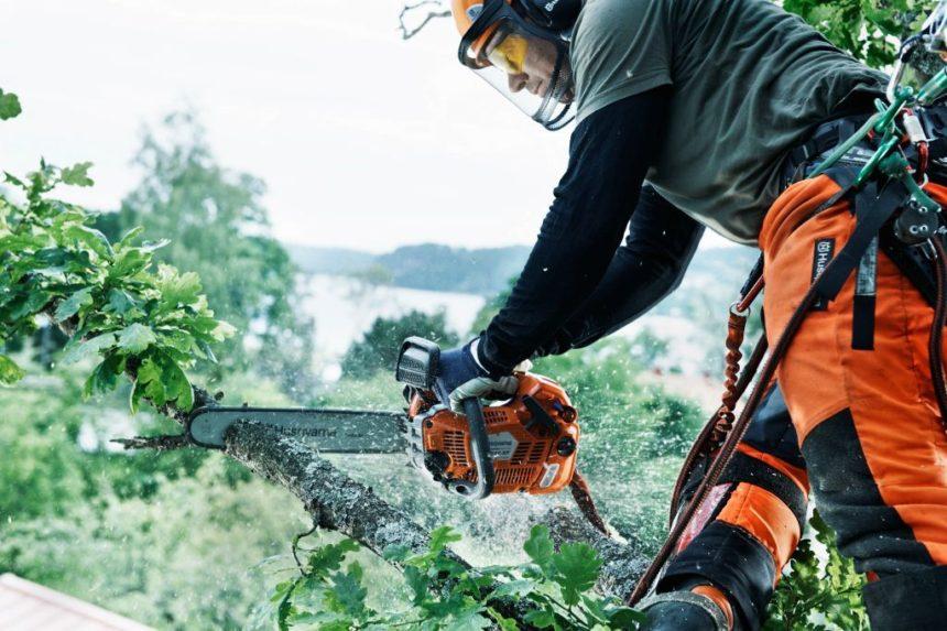 Pilarki Husqvarna pomagają arborystom